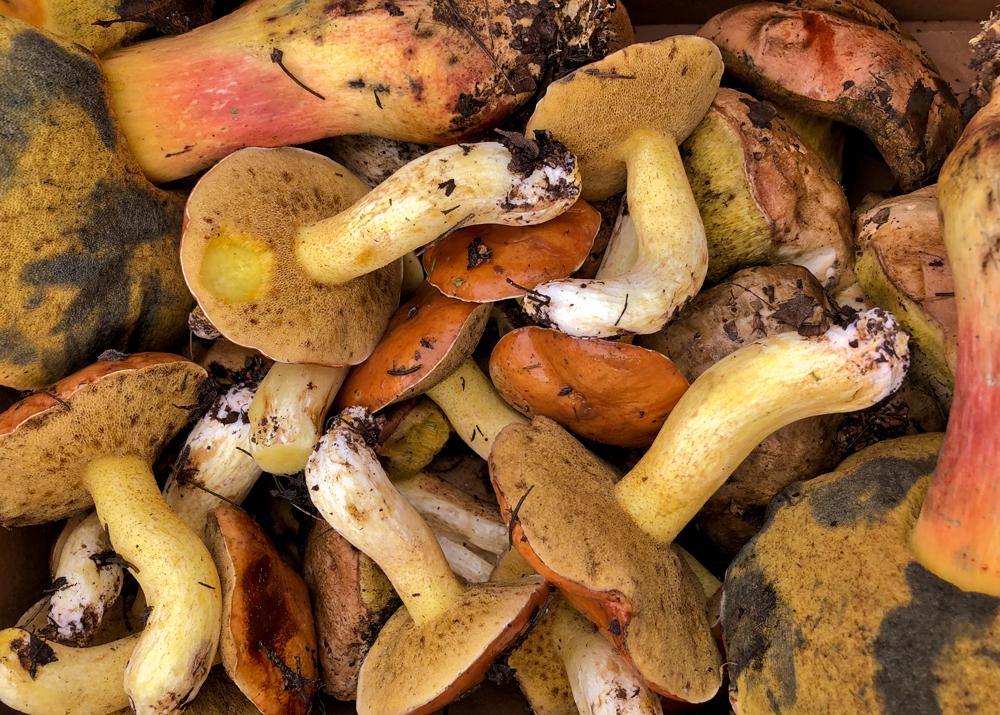 грибы и панки